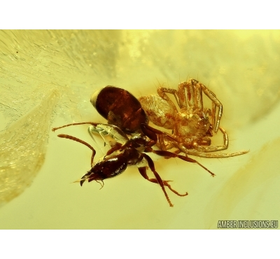 Ant and Spider in Baltic amber #5004