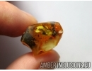 APOIDEA, Honey Bee in Baltic amber #5307