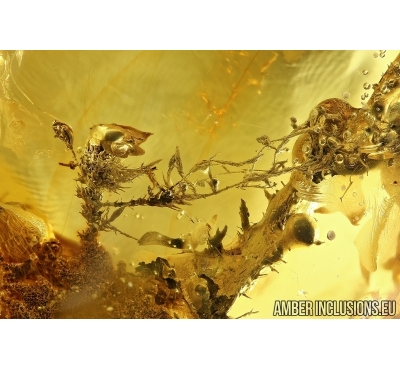 Moss Twigs. Fossil inclusions in Big 74g Baltic amber stone #6095