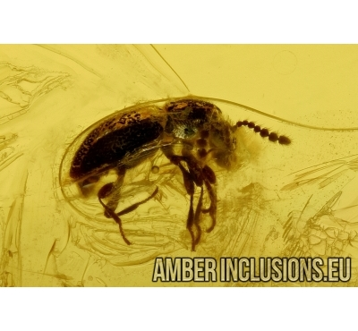 Beetle and Ant. Fossil inclusions in Baltic amber #6114