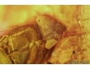Spider, Termite and Fly. Fossil inclusions in Baltic amber #6633
