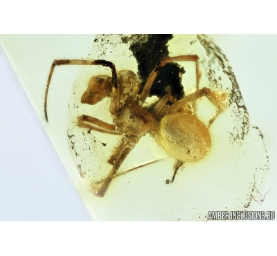 Araneae, Spider. Fossil inclusion in Baltic amber stone #6778