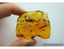 NICE THUJA, PLANT and GNAT. Fossil inclusions in Big Baltic amber stone #6880