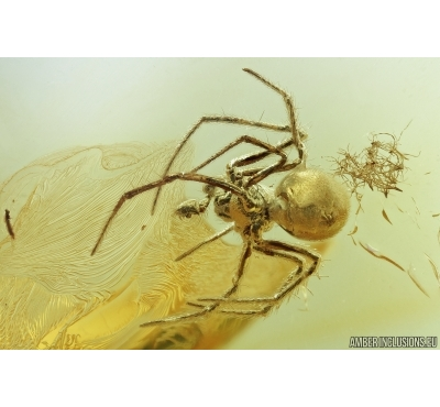 Spider, Araneae. Fossil inclusion in Baltic amber stone #7131