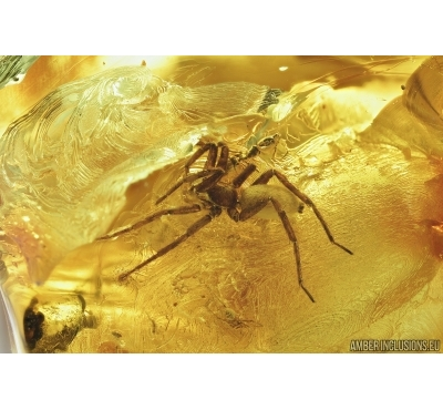 Big Spider and Ant. Fossil inclusions in Baltic amber 7236