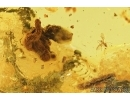 Three  Centipedes, Geophilidae and More.  Fossil inclusions in Ukrainian amber #7766