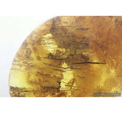 Wood fragments. Fossil inclusions in Baltic amber #7933