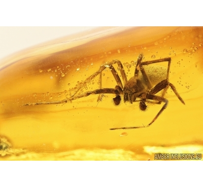Nice Big Spider, Araneae. Fossil inclusion in Baltic amber stone #7947