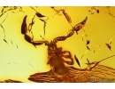 Pseudoscorpion and Beetle. Fossil inclusions in Baltic amber #7976