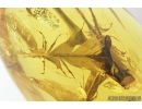 Very Nice, Big Four Feathers, Aves. Fossil inclusions in Baltic amber #8198