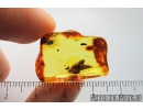 Very Nice Plant. Fossil inclusions in Baltic amber #8302