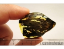 Nice, big 40mm! wood fragment. Fossil inclusion in Baltic amber #8658