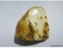 Genuine BALTIC AMBER Stone. 98 grams. #st-033